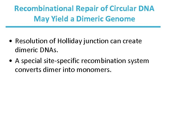 Recombinational Repair of Circular DNA May Yield a Dimeric Genome • Resolution of Holliday