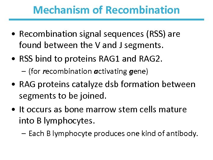 Mechanism of Recombination • Recombination signal sequences (RSS) are found between the V and
