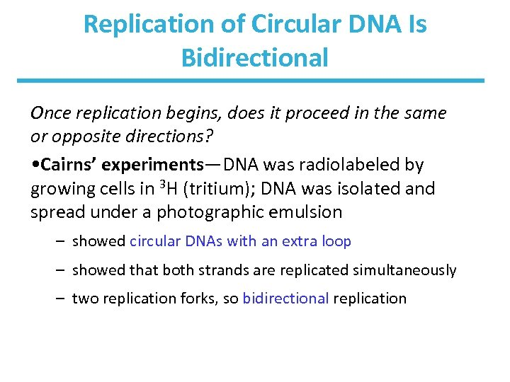 Replication of Circular DNA Is Bidirectional Once replication begins, does it proceed in the