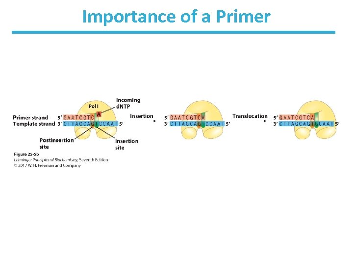 Importance of a Primer