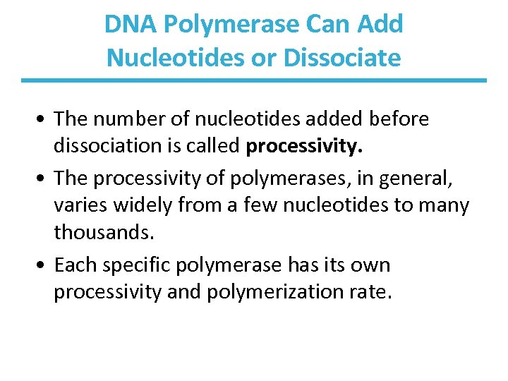 DNA Polymerase Can Add Nucleotides or Dissociate • The number of nucleotides added before