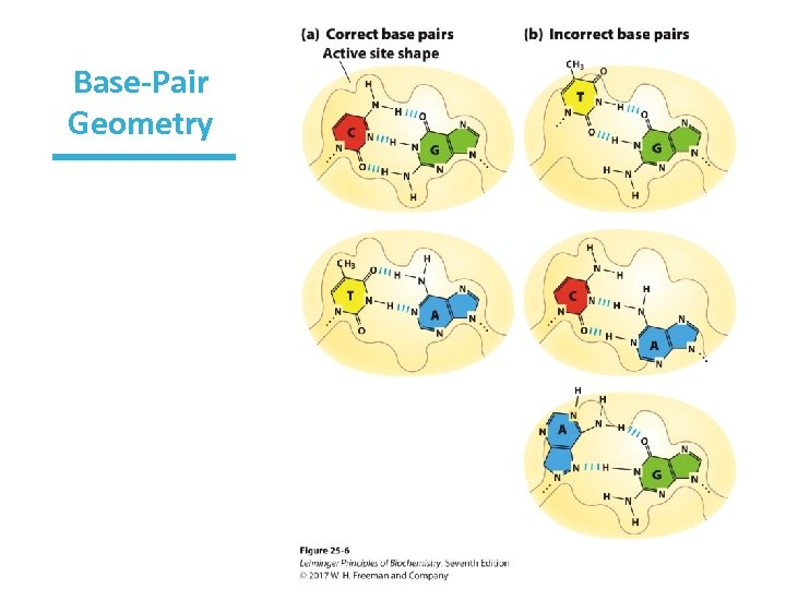 Base-Pair Geometry