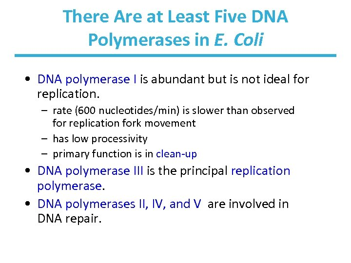 There Are at Least Five DNA Polymerases in E. Coli • DNA polymerase I