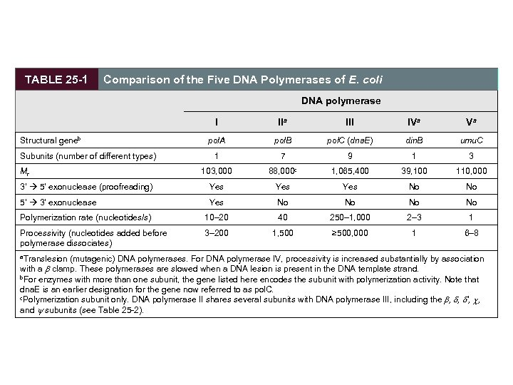 TABLE 25 -1 Comparison of the Five DNA Polymerases of E. coli DNA polymerase
