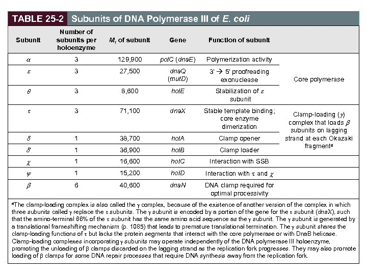TABLE 25 -2 Subunits of DNA Polymerase III of E. coli Subunit Number of