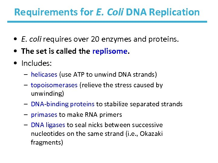 Requirements for E. Coli DNA Replication • E. coli requires over 20 enzymes and