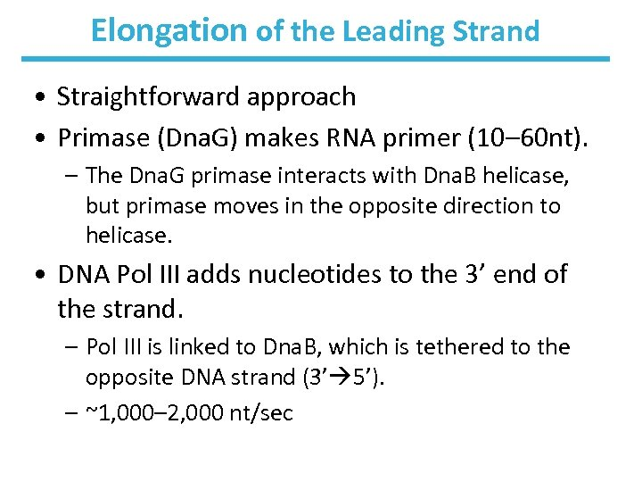 Elongation of the Leading Strand • Straightforward approach • Primase (Dna. G) makes RNA