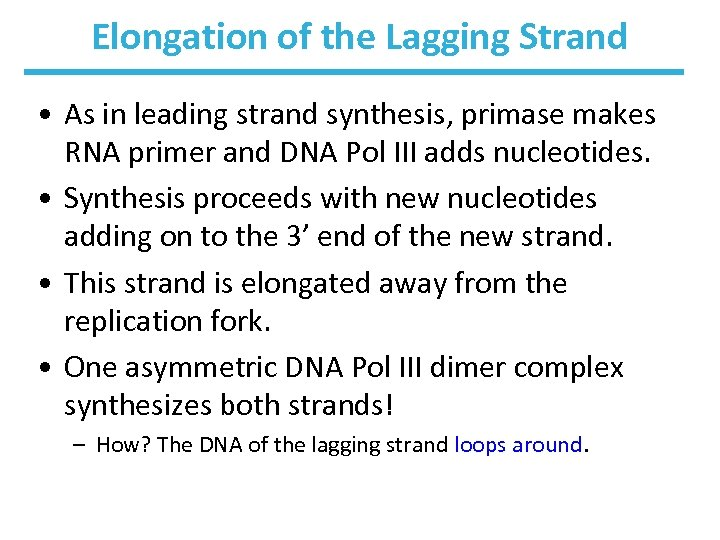Elongation of the Lagging Strand • As in leading strand synthesis, primase makes RNA