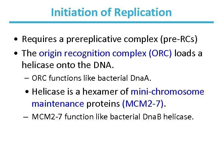 Initiation of Replication • Requires a prereplicative complex (pre-RCs) • The origin recognition complex