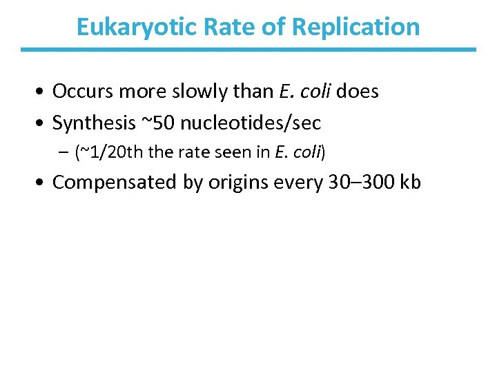 Eukaryotic Rate of Replication • Occurs more slowly than E. coli does • Synthesis