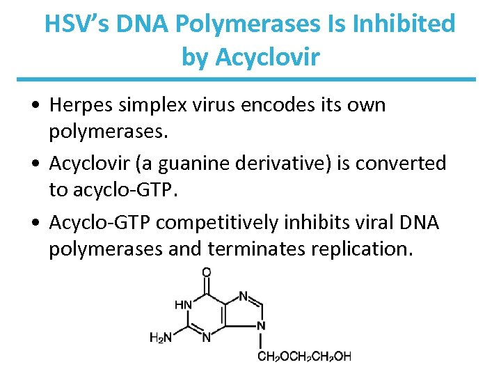 HSV's DNA Polymerases Is Inhibited by Acyclovir • Herpes simplex virus encodes its own