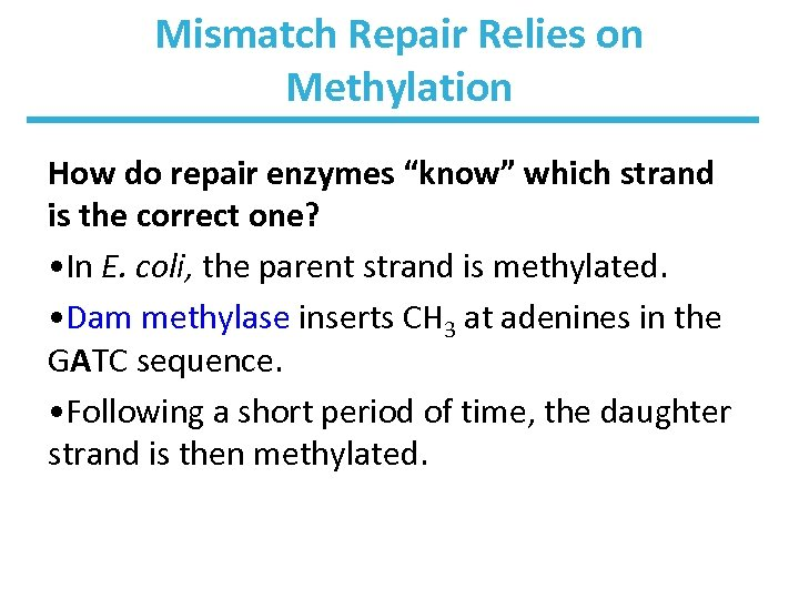 "Mismatch Repair Relies on Methylation How do repair enzymes ""know"" which strand is the"