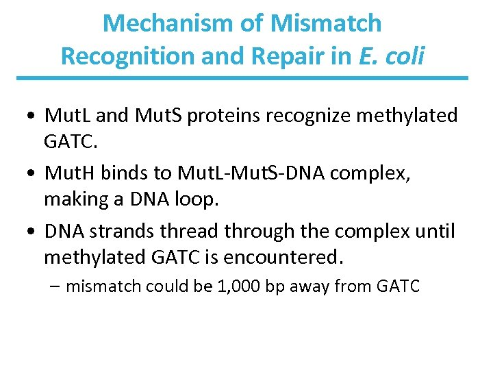 Mechanism of Mismatch Recognition and Repair in E. coli • Mut. L and Mut.