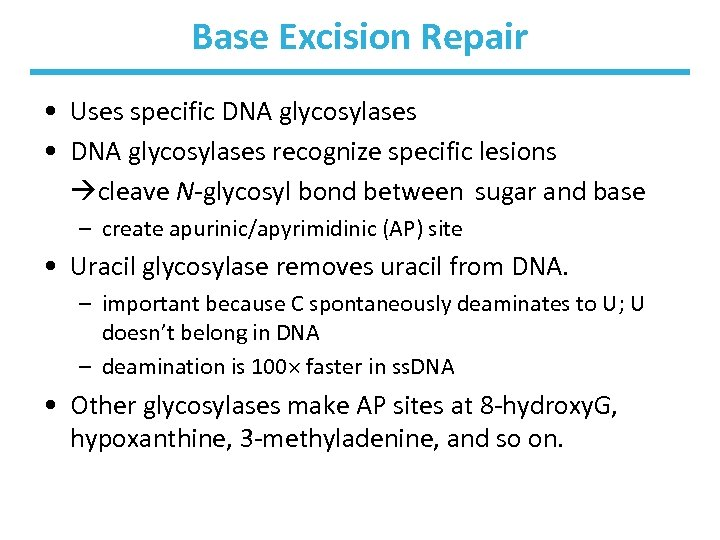 Base Excision Repair • Uses specific DNA glycosylases • DNA glycosylases recognize specific lesions