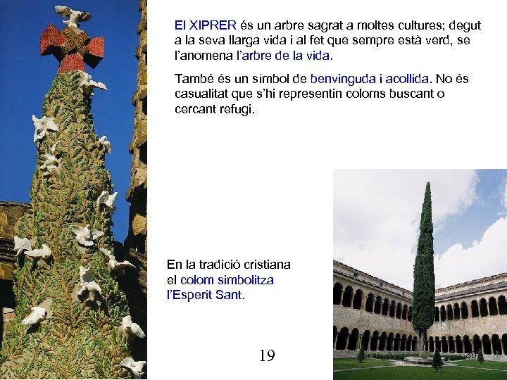 El XIPRER és un arbre sagrat a moltes cultures; degut a la seva llarga