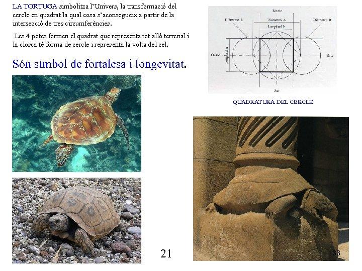 LA TORTUGA simbolitza l'Univers, la transformació del cercle en quadrat la qual cosa s'aconsegueix