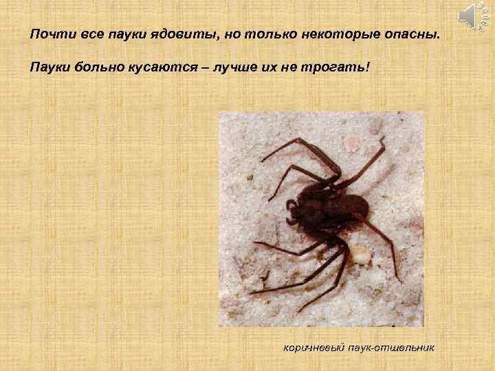 Почти все пауки ядовиты, но только некоторые опасны. Пауки больно кусаются – лучше их