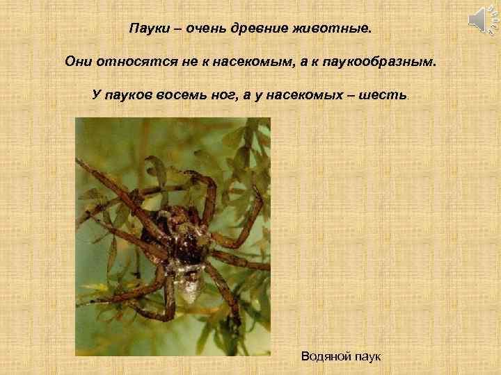 Пауки – очень древние животные. Они относятся не к насекомым, а к паукообразным. У