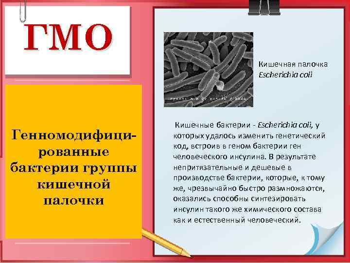 ГМО Генномодифицированные бактерии группы кишечной палочки Кишечная палочка Escherichia coli Кишечные бактерии - Escherichia