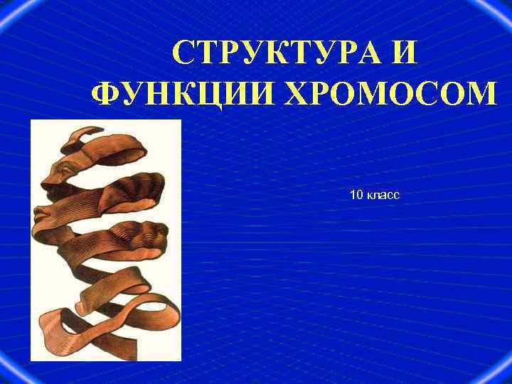 СТРУКТУРА И ФУНКЦИИ ХРОМОСОМ 10 класс