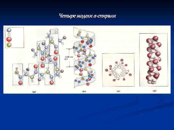Четыре модели α-спирали Углерод Водород Кислород Азот