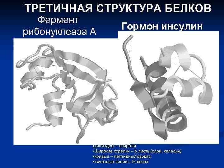 ТРЕТИЧНАЯ СТРУКТУРА БЕЛКОВ Фермент рибонуклеаза А Гормон инсулин Цилиндры – спирали • Широкие стрелки