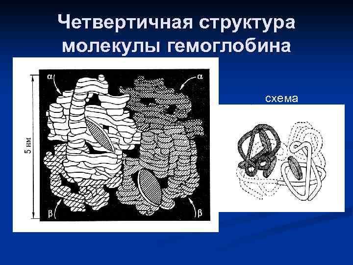 Четвертичная структура молекулы гемоглобина схема