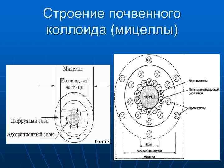 Строение почвенного коллоида (мицеллы)