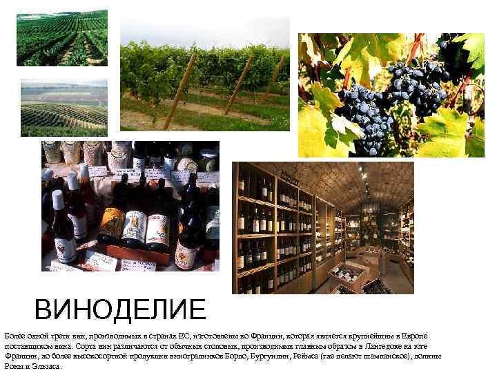 ВИНОДЕЛИЕ Более одной трети вин, производимых в странах ЕС, изготовлены во Франции, которая является