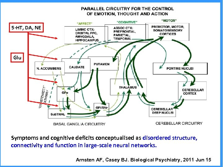 5 -HT, DA, NE Glu Symptoms and cognitive deficits conceptualised as disordered structure, connectivity