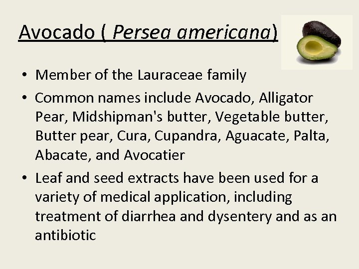 Avocado ( Persea americana) • Member of the Lauraceae family • Common names include