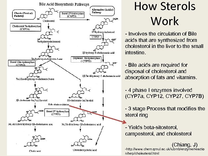 How Sterols Work - Involves the circulation of Bile acids that are synthesized from
