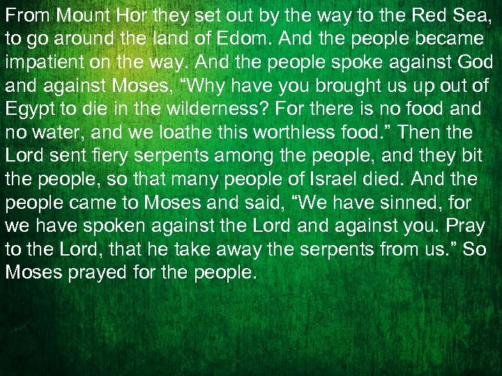 From Mount Hor they set out by the way to the Red Sea, to