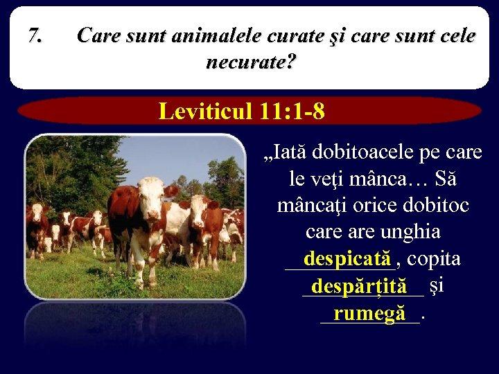 7. Care sunt animalele curate şi care sunt cele necurate? Leviticul 11: 1 -8