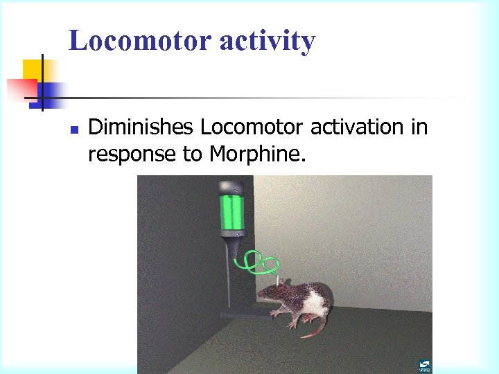 Locomotor activity n Diminishes Locomotor activation in response to Morphine.