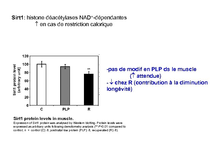 Sirt 1: histone déacétylases NAD+-dépendantes en cas de restriction calorique -pas de modif en