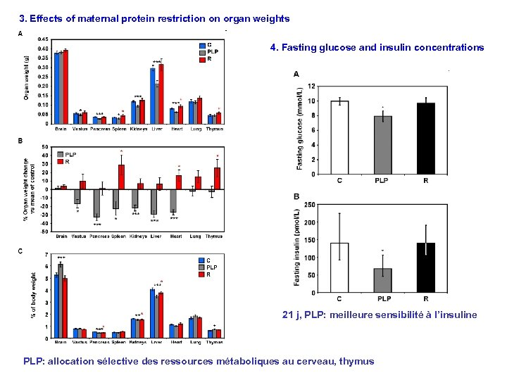 3. Effects of maternal protein restriction on organ weights 4. Fasting glucose and insulin