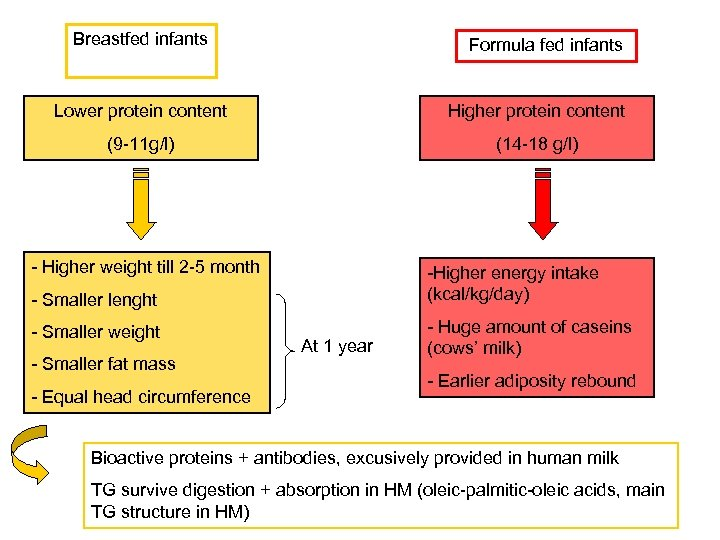 Breastfed infants Formula fed infants Lower protein content Higher protein content (9 -11 g/l)