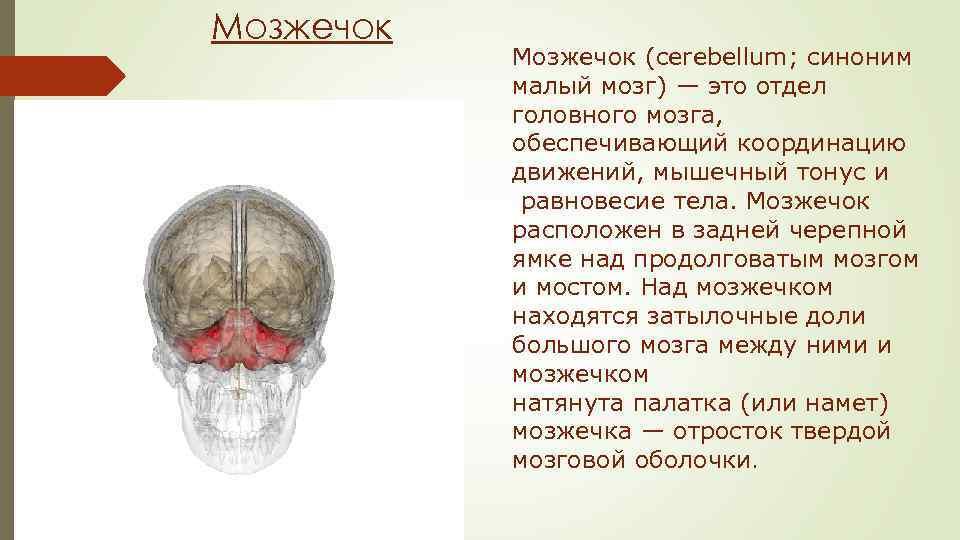 даже картинка где находится мозжечок челябинске некоторые студии