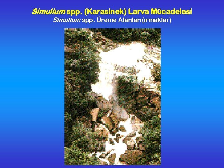 Simulium spp. (Karasinek) Larva Mücadelesi Simulium spp. Üreme Alanları(ırmaklar)