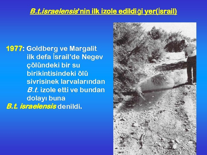 B. t. israelensis'nin ilk izole edildiği yer(İsrail) 1977: Goldberg ve Margalit ilk defa İsrail'de