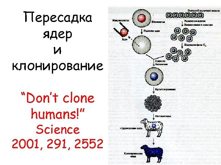 """Пересадка ядер и клонирование """"Don't clone humans!"""" Science 2001, 291, 2552"""