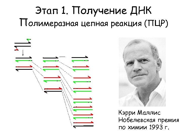 Этап 1. Получение ДНК Полимеразная цепная реакция (ПЦР) Кэрри Маллис Нобелевская премия по химии