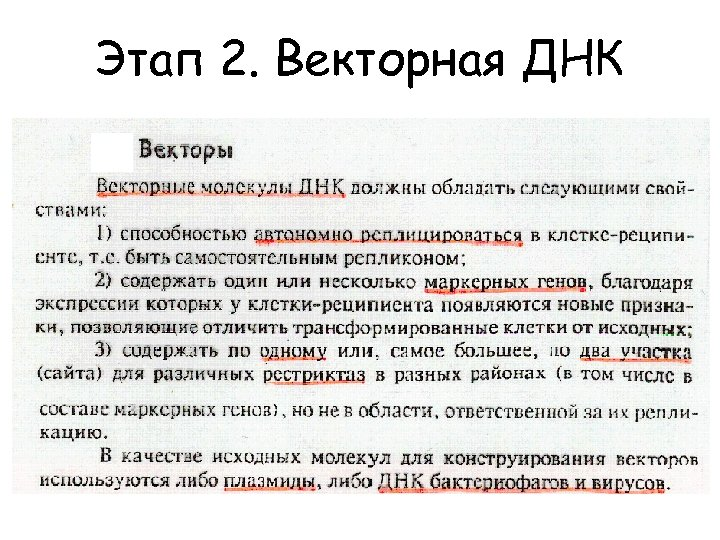 Этап 2. Векторная ДНК