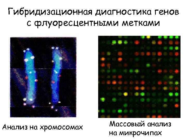 Гибридизационная диагностика генов с флуоресцентными метками Анализ на хромосомах Массовый анализ на микрочипах