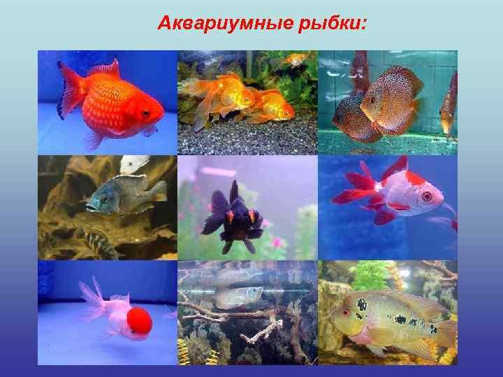Аквариумные рыбки: