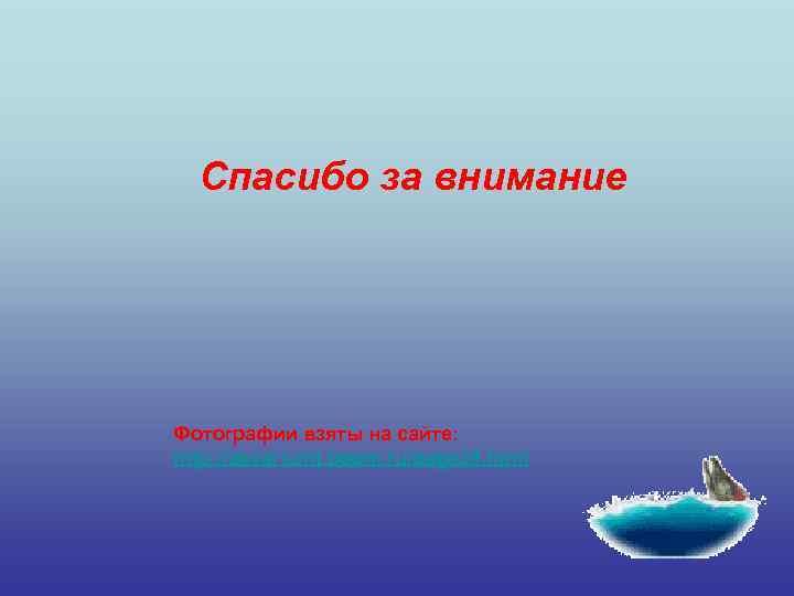 Спасибо за внимание Фотографии взяты на сайте: http: //akvariumt. boom. ru/page 39. html