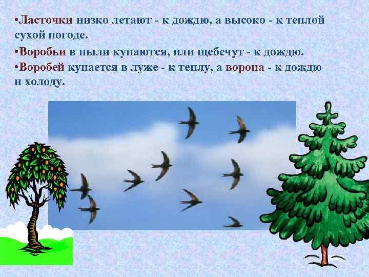 • Ласточки низко летают - к дождю, а высоко - к теплой сухой