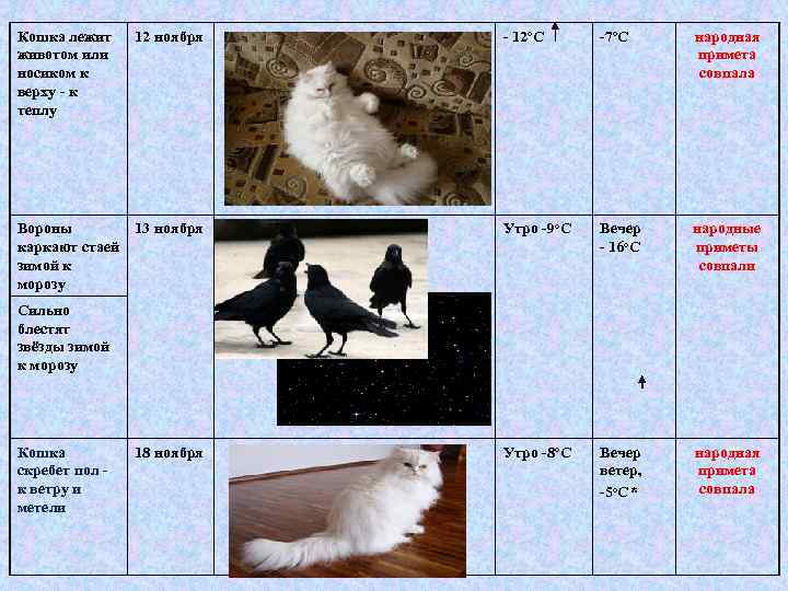 Кошка лежит животом или носиком к верху - к теплу 12 ноября - 12