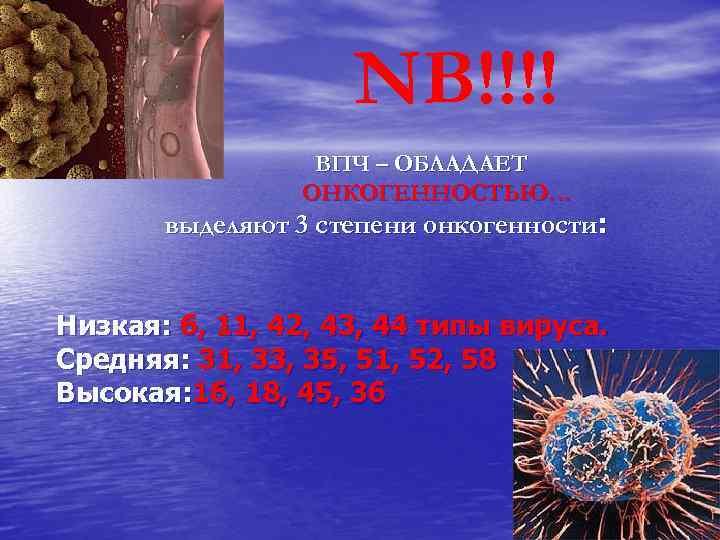 NB!!!! ВПЧ – ОБЛАДАЕТ ОНКОГЕННОСТЬЮ… выделяют 3 степени онкогенности: Низкая: 6, 11, 42, 43,